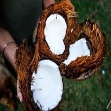 Coconut Oil and Why We Need It