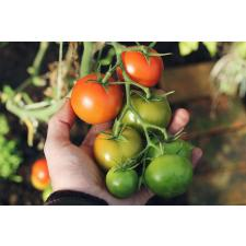 9 Veggies You Can Grow in Small Spaces
