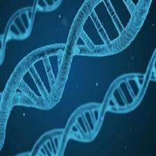 MTHFR Mutation Symptoms – Problems With Methylation and What This Means