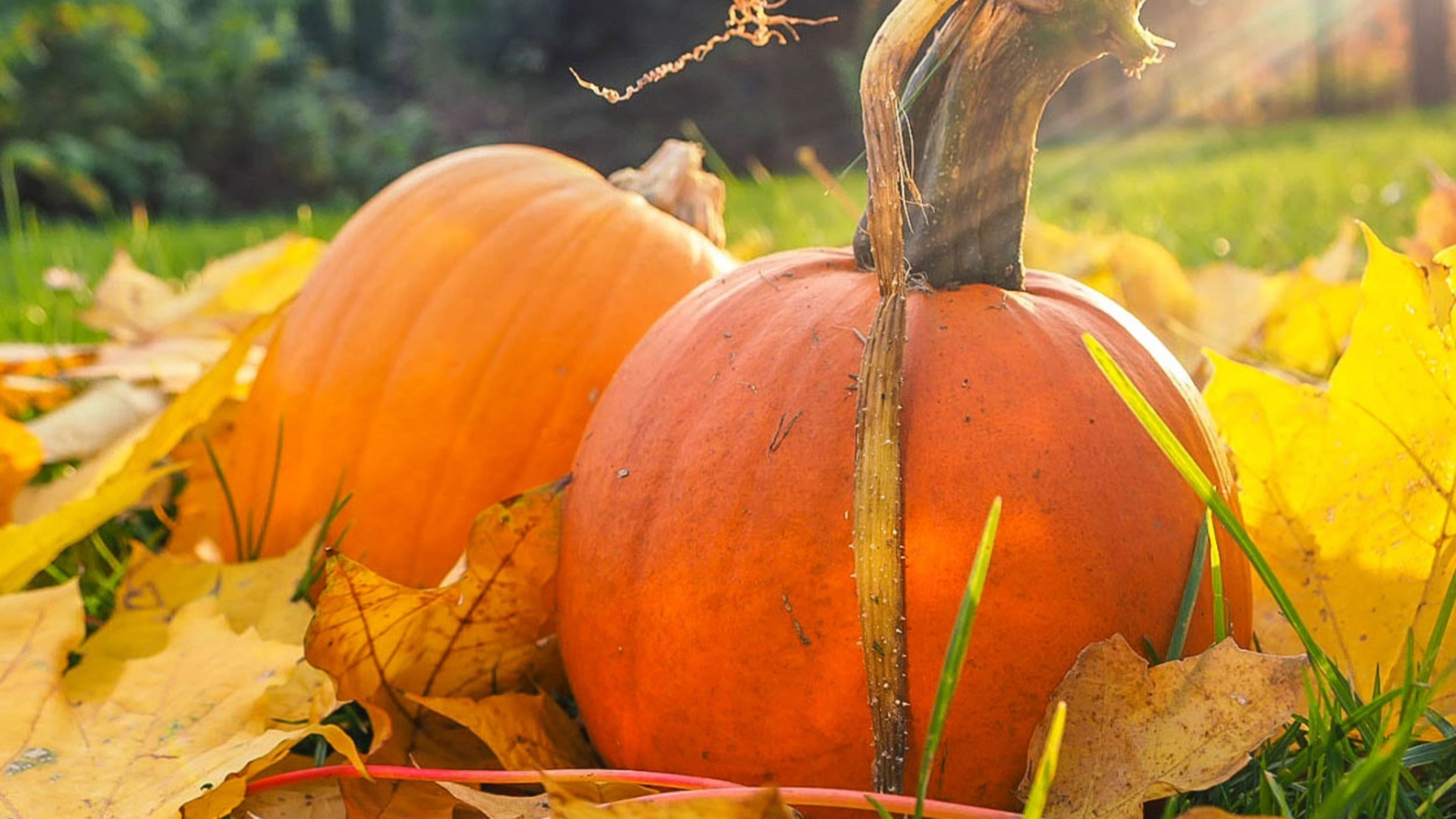 The Many Uses of Pumpkin